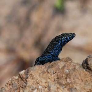 lizard Marine Protected Area tavolara capo coda cavallo